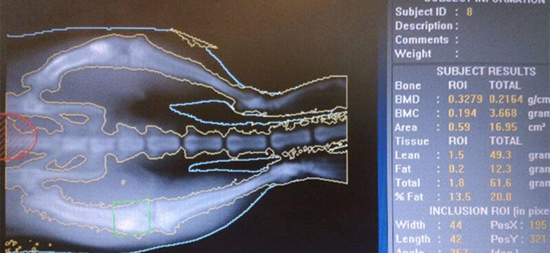 red-investigacion-quiropractica